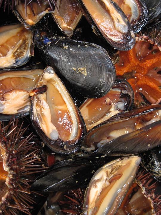 Mussels, Seafood, Edible, Starter, Frisch