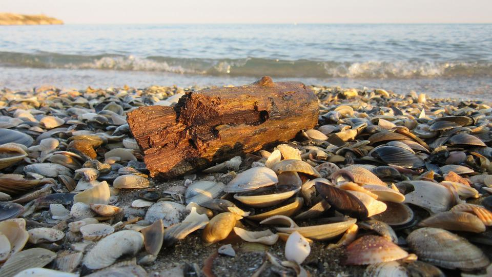 Drift Wood, Sand, Mussels, Beach, Wood, Flotsam, Sea