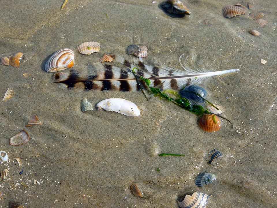 Seagull Feather, Mussels, Sand, Bird Feather