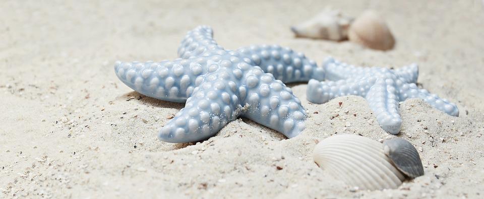 Starfish, Mussels, Sand, Porcelain, Porcelain Starfish