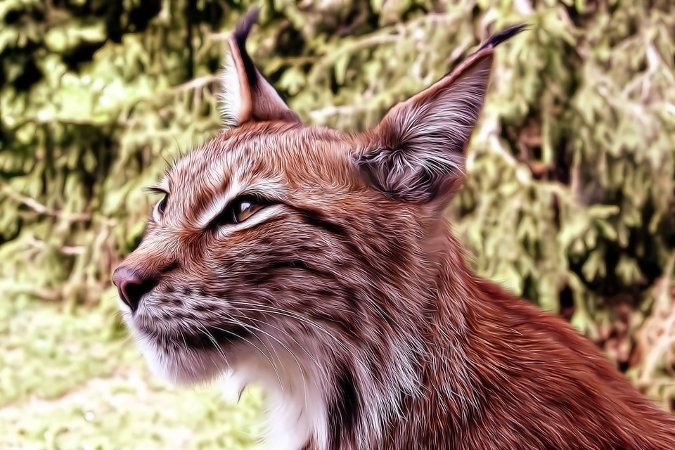 Lynx, Cat, Kitten, Tomcat, Animals, Pet, Fur, Mustache