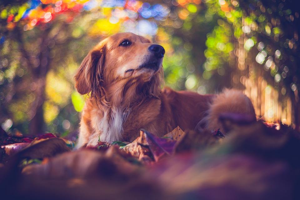 Free Photo Mutt Canine Puppy Dog Bug Shih Tzu Pet Animal Max Pixel