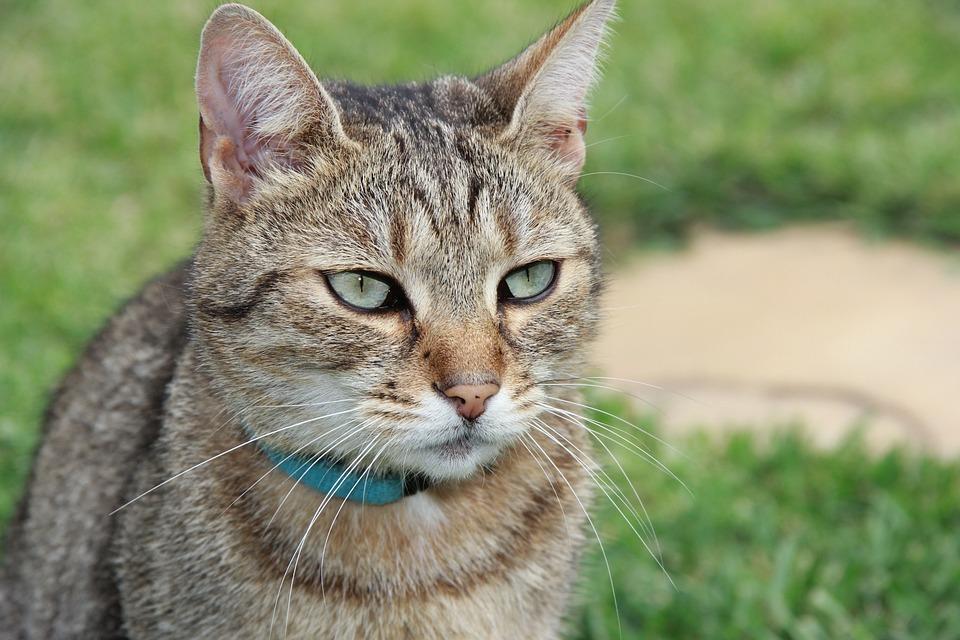 Cat, Kitten, My Favorite, Friend, Tabby, Cute, Animal