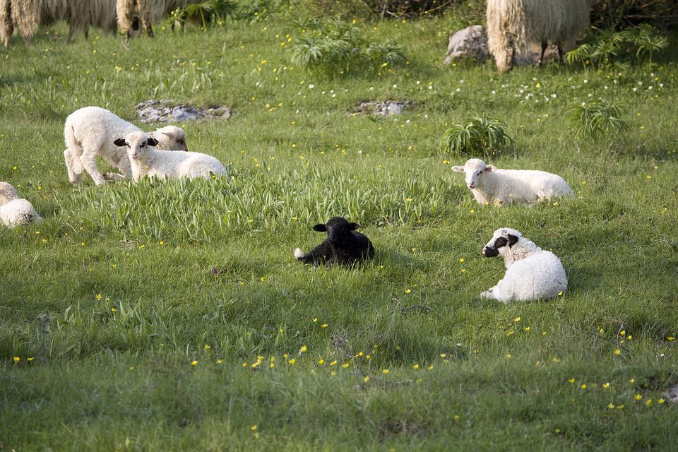 Different, Black Sheep, Special, My Way, Family, Grass