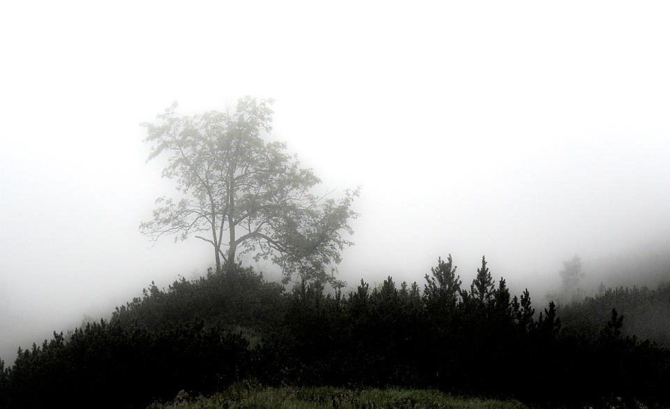 Fog, Mystical, Forest, Mood, Unterberg, Mysterious