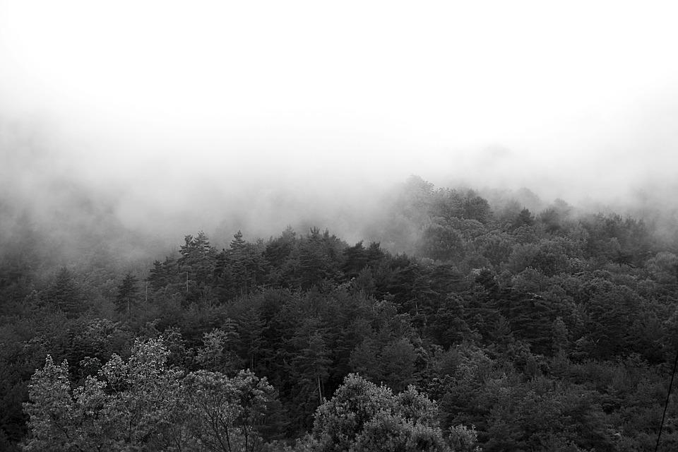 Fog, Trees, Forest, Nature, Landscape, Mist, Mystery