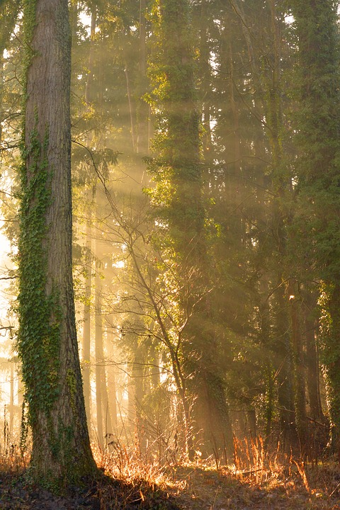 Sun, Sunbeam, Forest, Autumn, Trees, Mystical