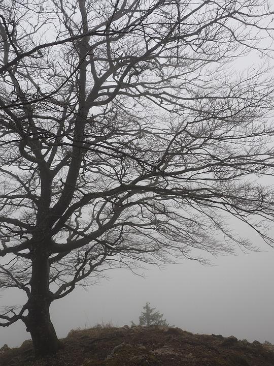 Tree, Beech, Foggy, Haunting, Mystical, Beech Wood