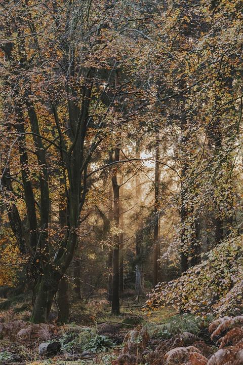 Forest, Light, Fog, Landscape, Path, Mood, Mystical