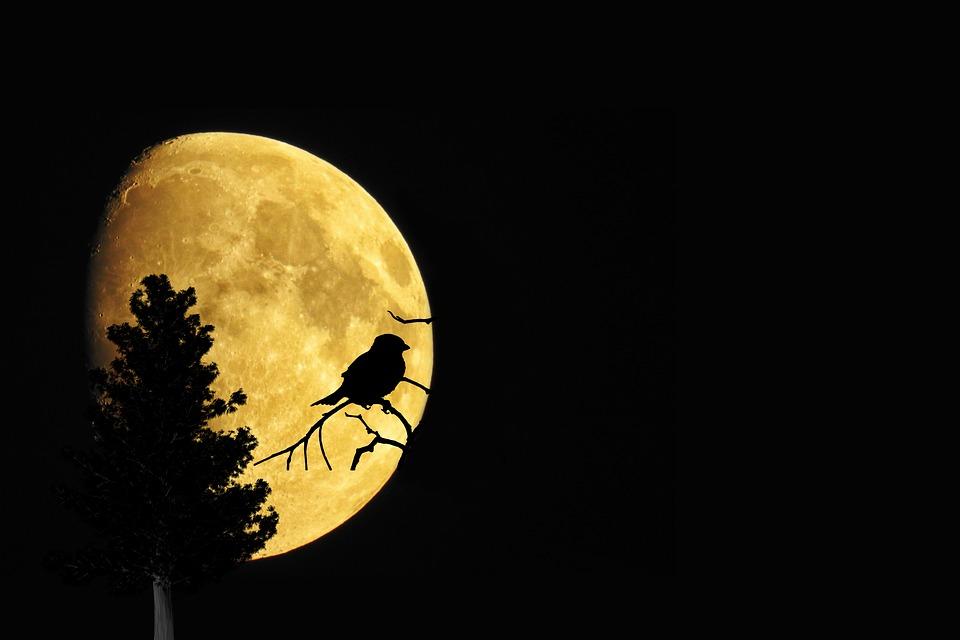 Mystical, Moon, Tree, Bird, Silhouette, Moonlight