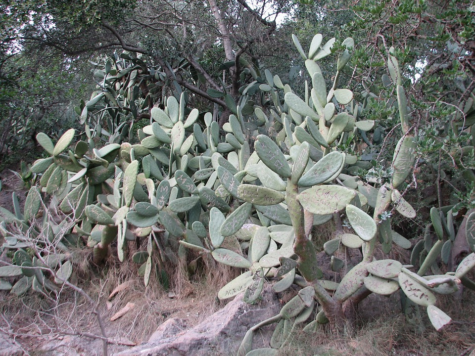 Cactus, Carve, Name, Plant