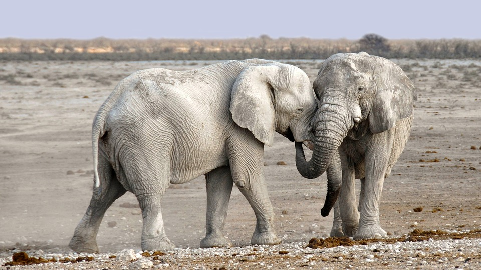 Elephant, Africa, Namibia, Nature, Dry, Heiss