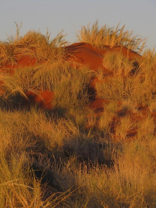 Sand Dune, Grass, Namibia, Coast, Natural, Coastline
