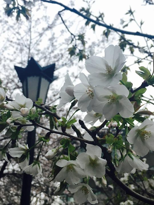 Nanjing, Jimingsi