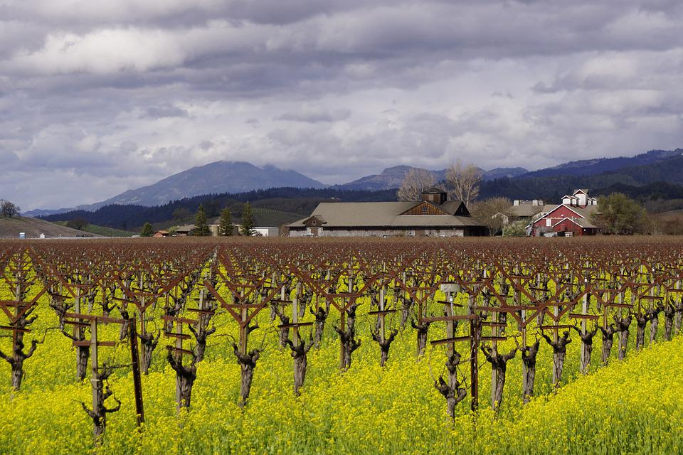 Napa Valley, Wineries, California, Landscape