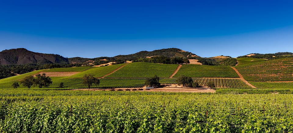 Vineyards, Napa Valley, California, Vine, Winery, Wine