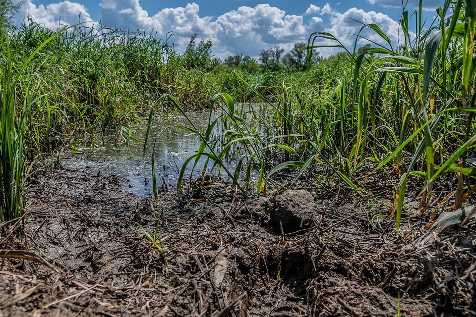 River, Swamp, Mud, Grass, Bushes, Plants, Bayou, Narev