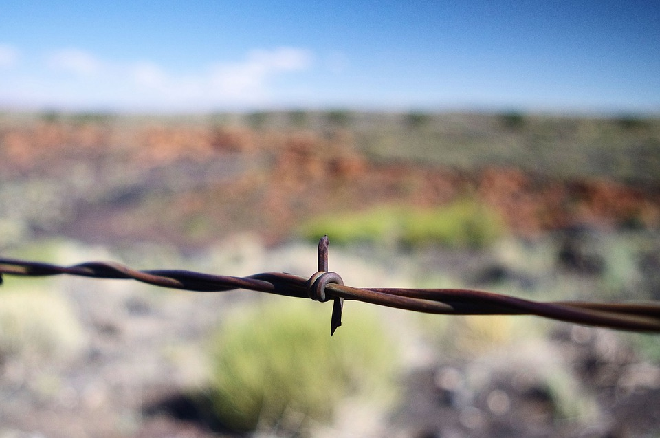 Arizona Barbed Wire, Sunset, Crater, National, Monument