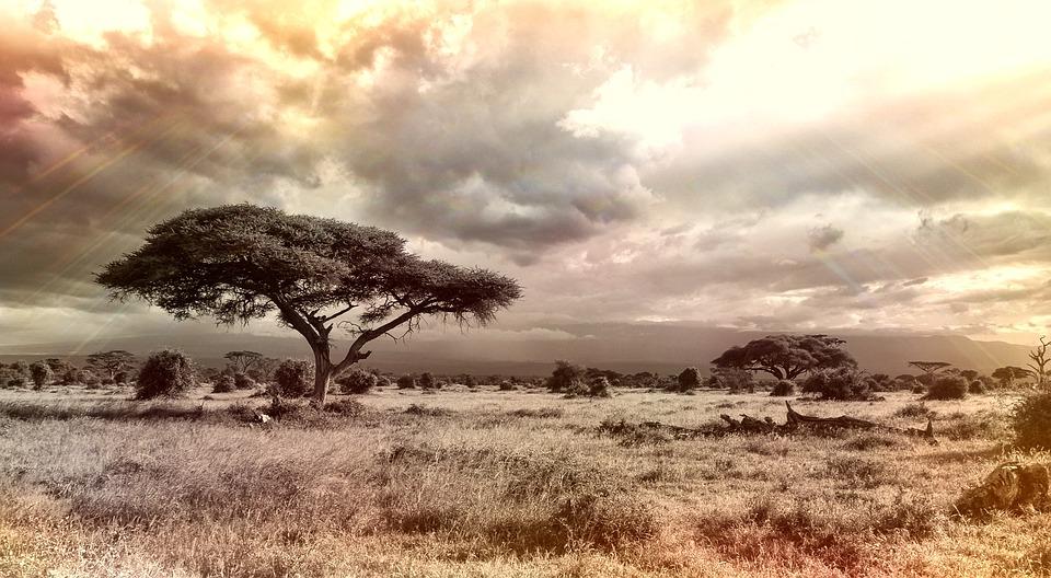 Africa, Savannah, National Park, Tree, Nature, Sky