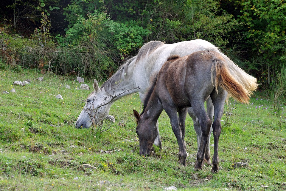 Horse, Foal, Horses, National Park Of Abruzzo, Pasture