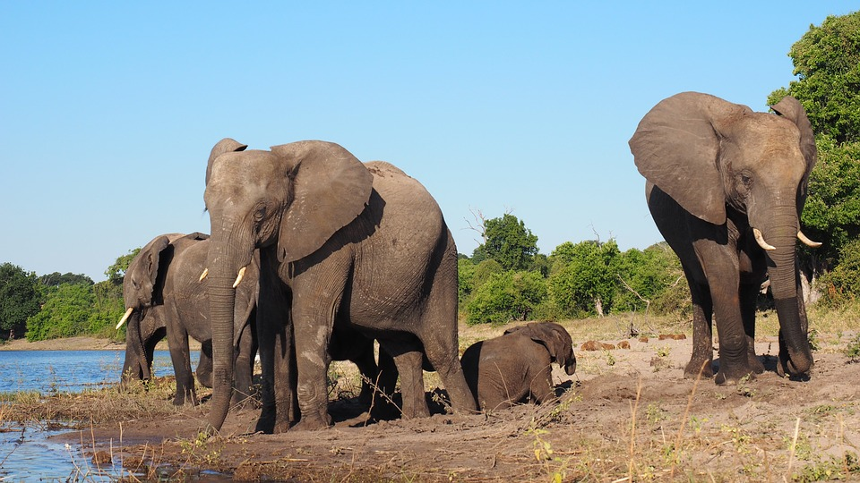Animals, Elephants, Africa, Safari, National Park