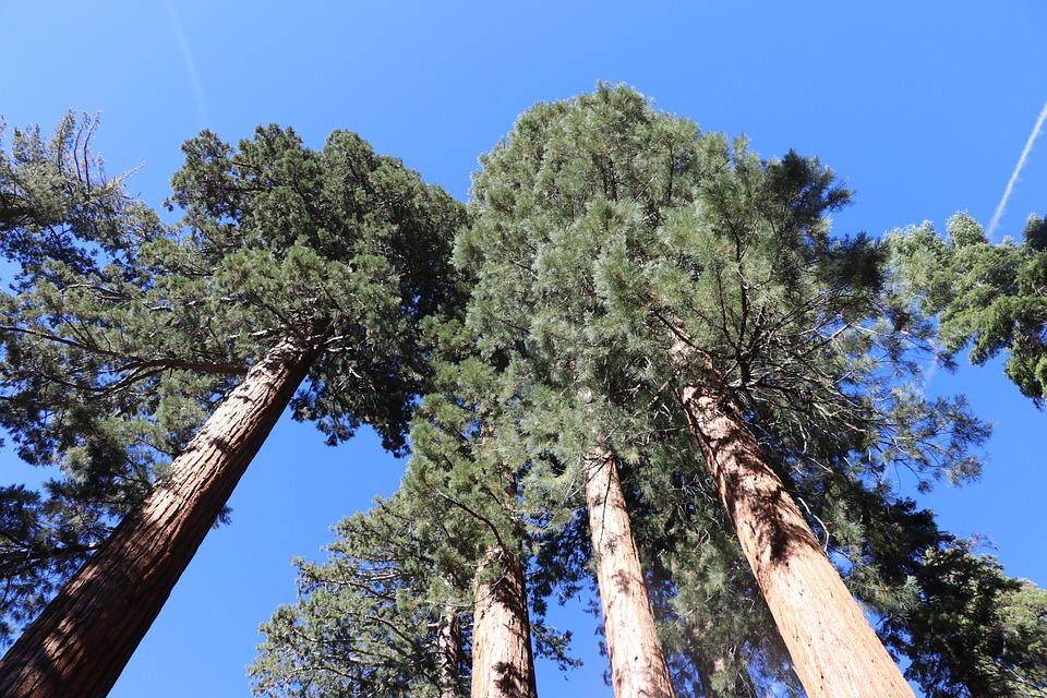 Yosemite, National Park, California, Landscape, Scenic
