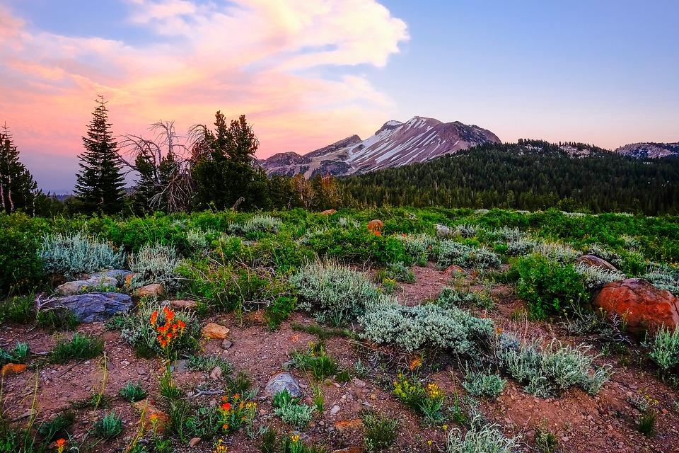 Yosemite National Park California Landscape Flowers