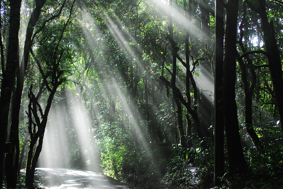 Sunlight, Woods, Thailand, National-park, Forest, Trees