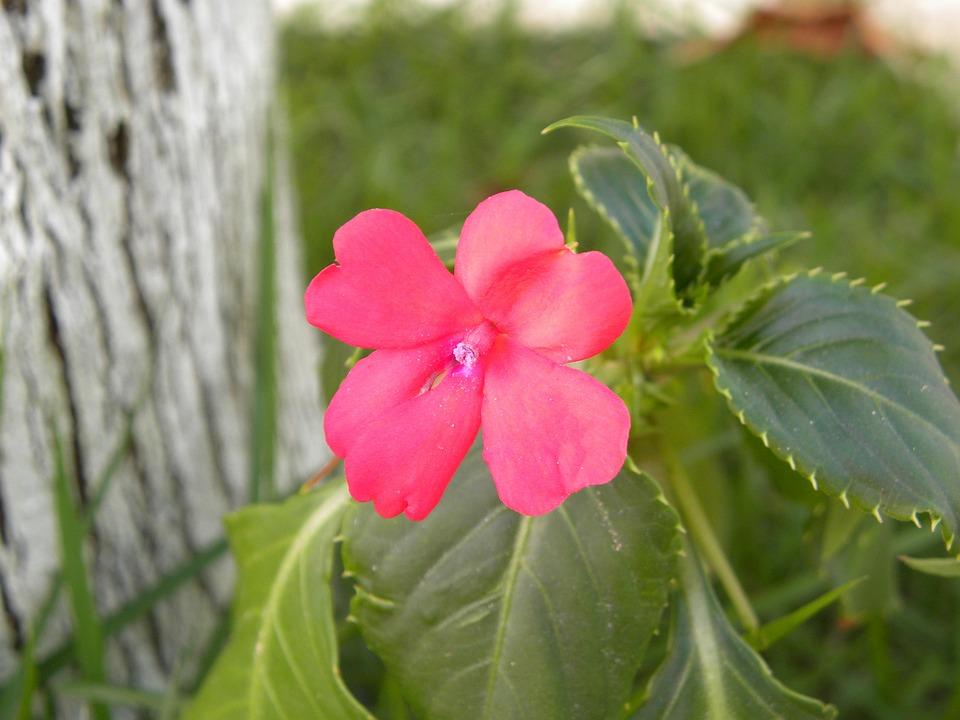 Flowers, Red Flower, Native Flower