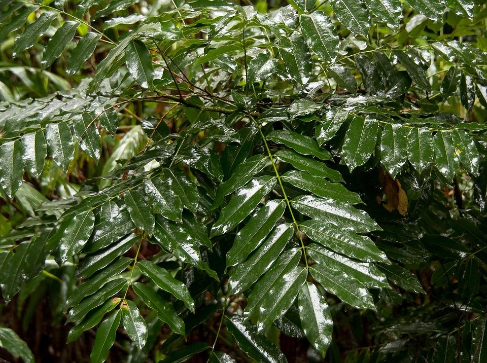 Leaves, Green, Rain Forest, Wild, Wet, Rain, Native