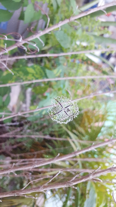Spider, Natura, Insect, Nature, Animal, Small, Fauna