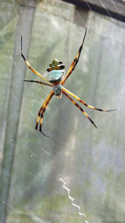 Spider, Insect, Natura, Nature, Animals, Animal, Small