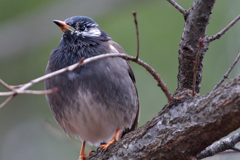 Bird, Wild Animals, Natural, Animal, Wings, Starlings
