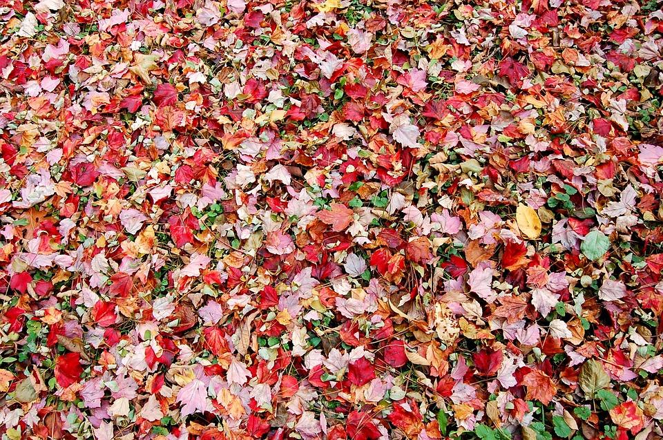 Natural, Autumn, Leaf, Fallen Leaves