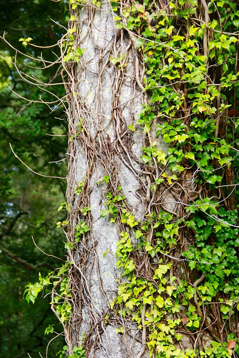 Tree, Bark, Nature, Trunk, Natural, Tree Trunk, Texture