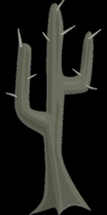 Cactus, Vegetation, Plant, Nature, Desert, Natural