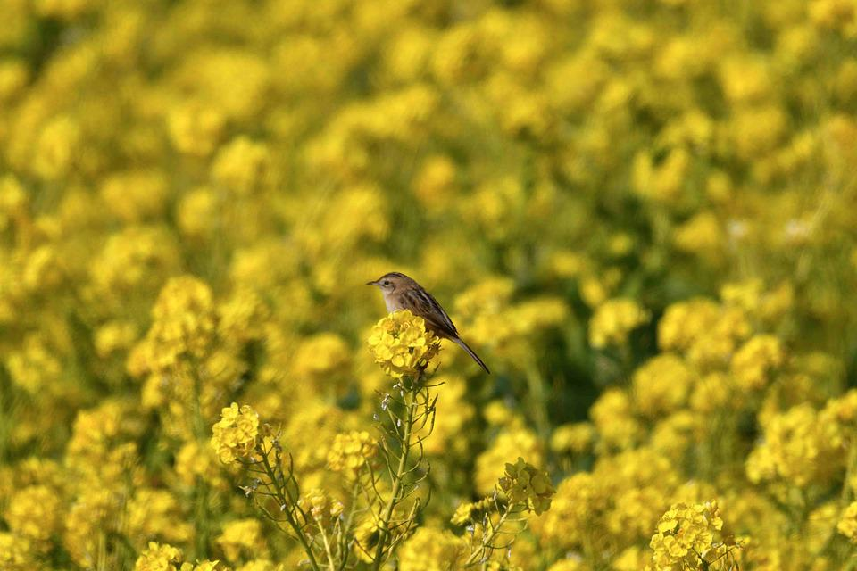 Flowers, Field, Natural, Plant