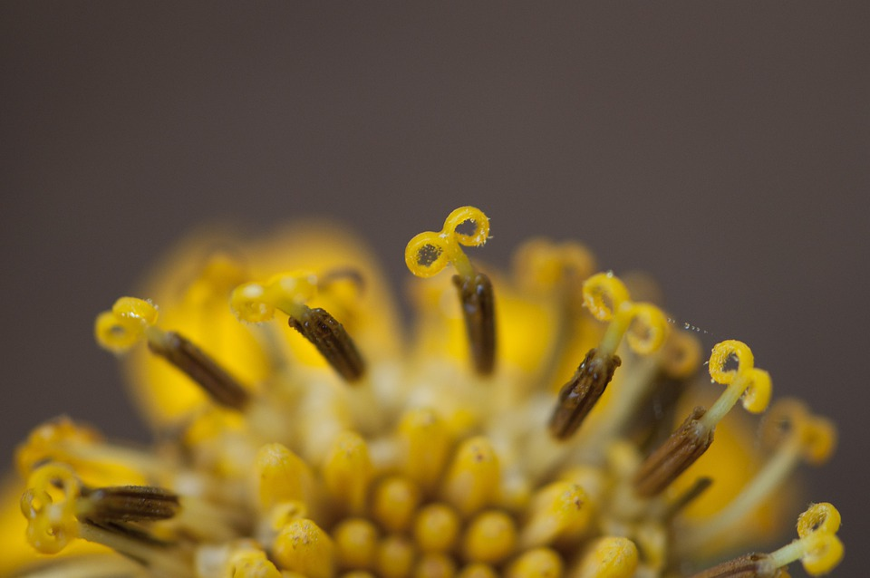 Flower, Pistil, Floral, Close Up, Plant, Natural