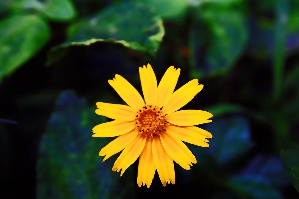 Nature, Plant, Petal, Petals, Romantic, Natural, Flower