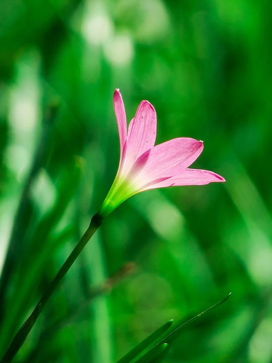 Stormy Blue, Flower, Natural, Pink Red, Green
