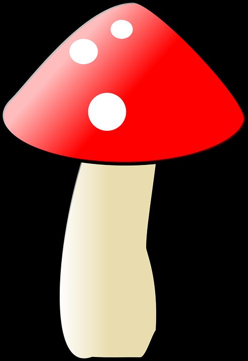Mushroom, Fungus, Natural, Raw