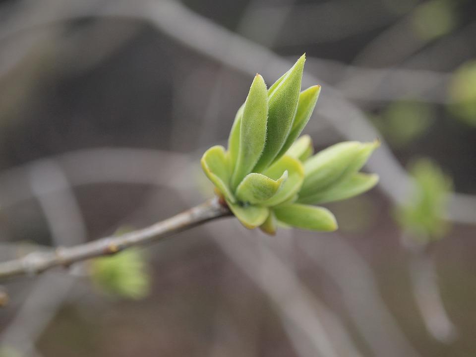 Natural, Green, New Shoots, Plant
