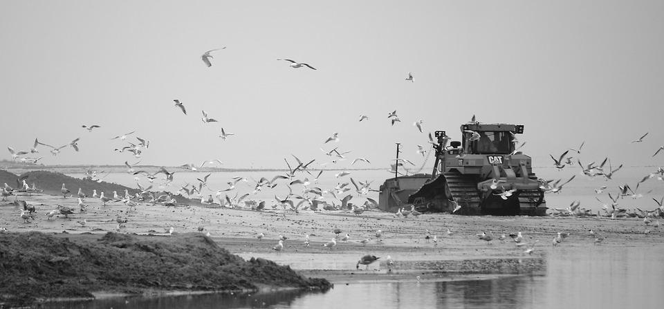 Bulldozer, Gulls, Natural, Heavy Machinery, Banner