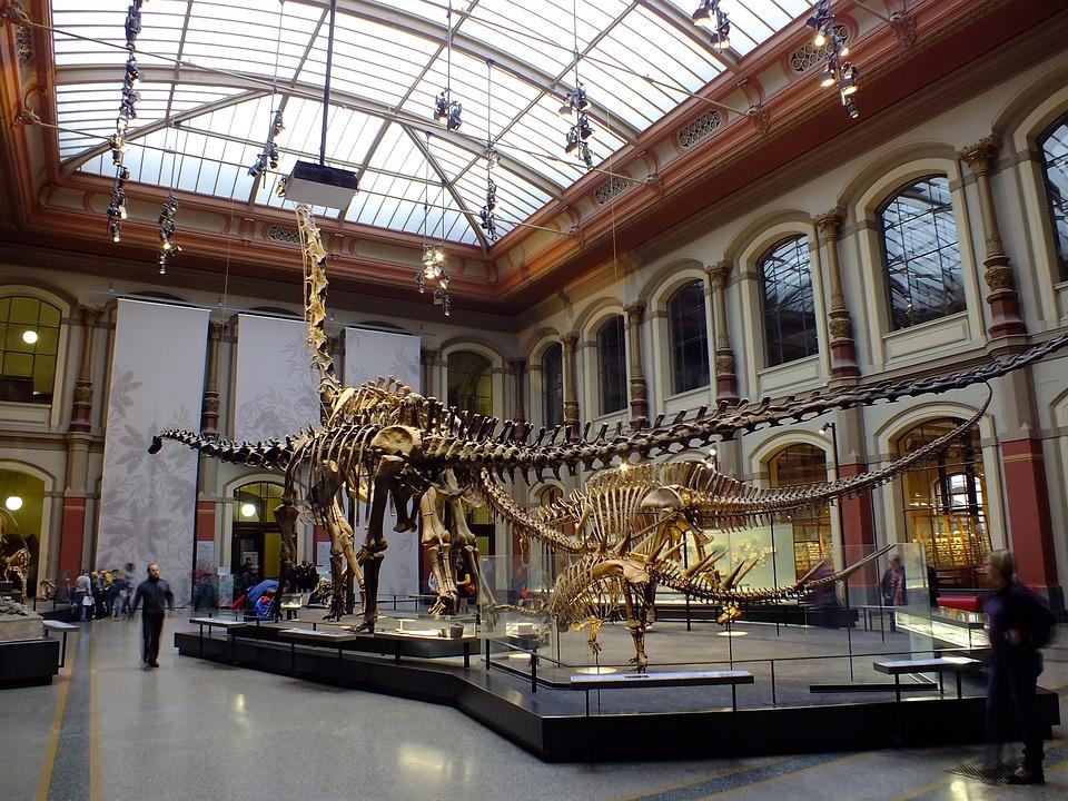 Museum, Berlin, Natural History