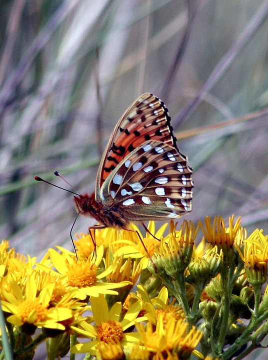 Butterfly, Macro, Insect, Nature, Bug, Natural