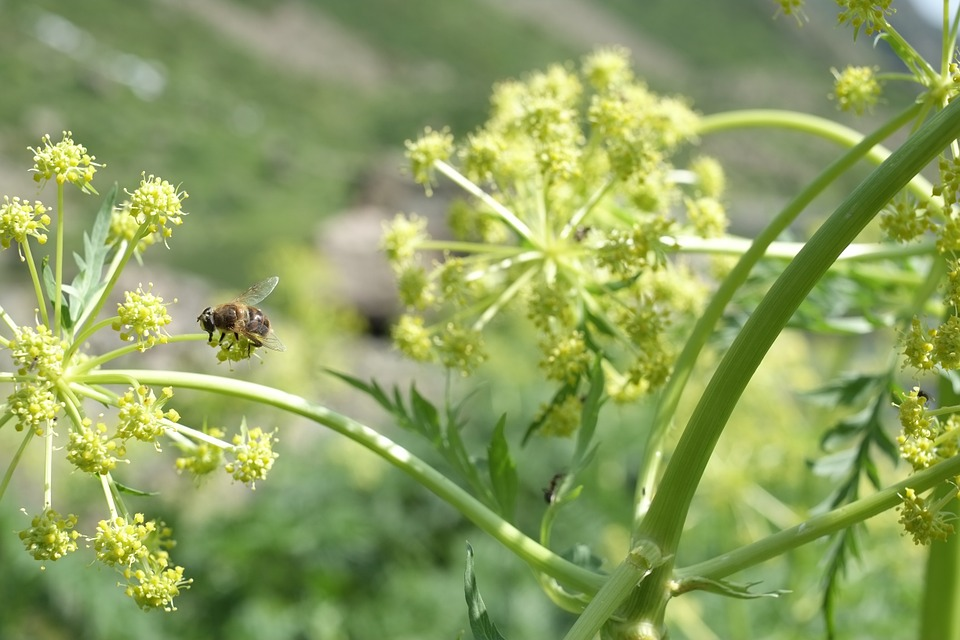 Insect, Bee, Plant, Nature, Yellow, Green, Natural