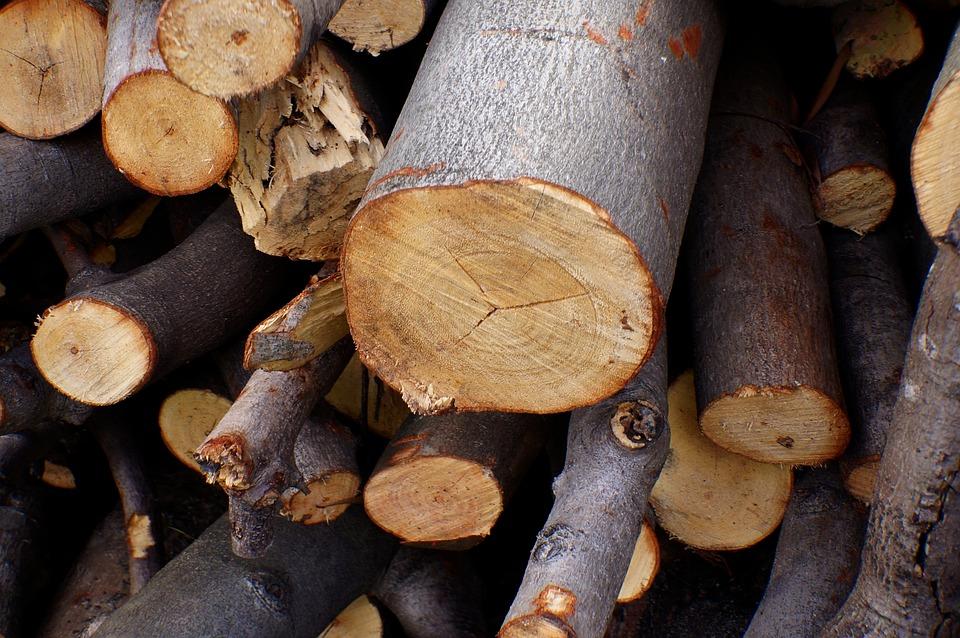 Lumbering, Natural, Devastating