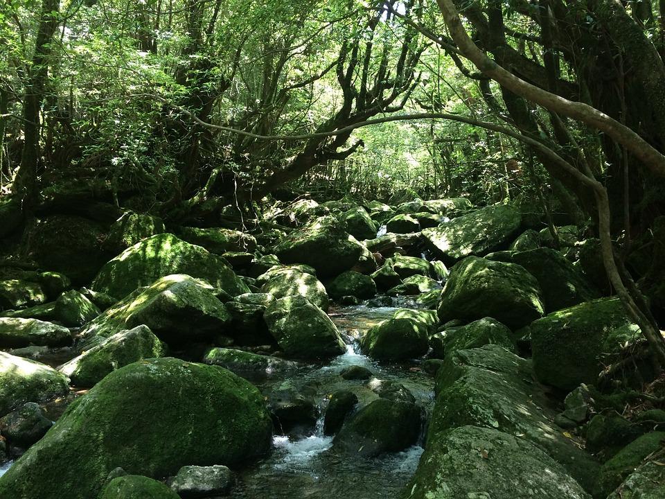 Yakushima Island, Natural, Mononoke