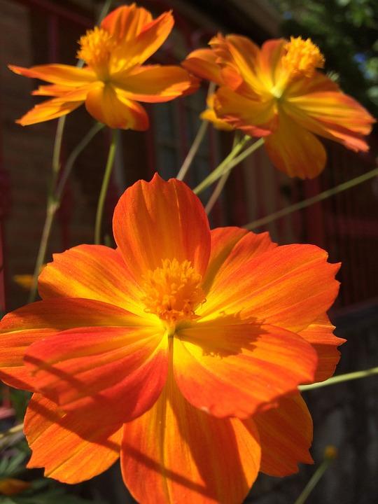 Flower, Light, Spring, Nature, Floral, Blossom, Natural