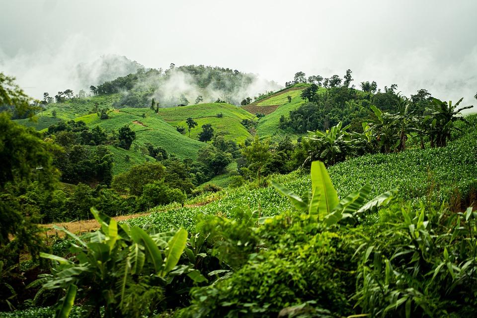 Forest, Jungle, Fog, Clouds, Nature, Natural, Asia